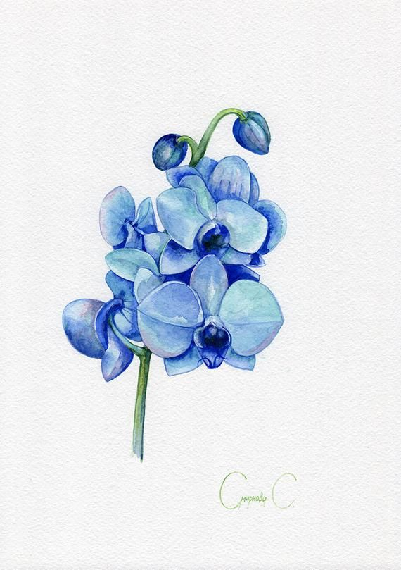 Ccc1967 Wedding Flowers Blue Orchids Orchid Wedding Blue Wedding Flowers