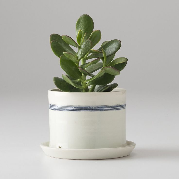 Banded Porcelain Planter   New Fall/Winter Collection   Schoolhouse Electric