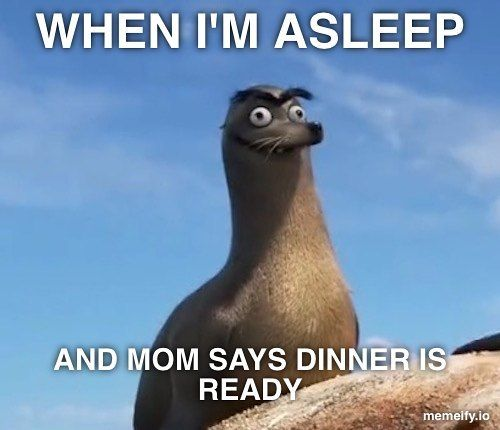 Did someone say dinner? #memes #memesdaily #dinner #findingdory