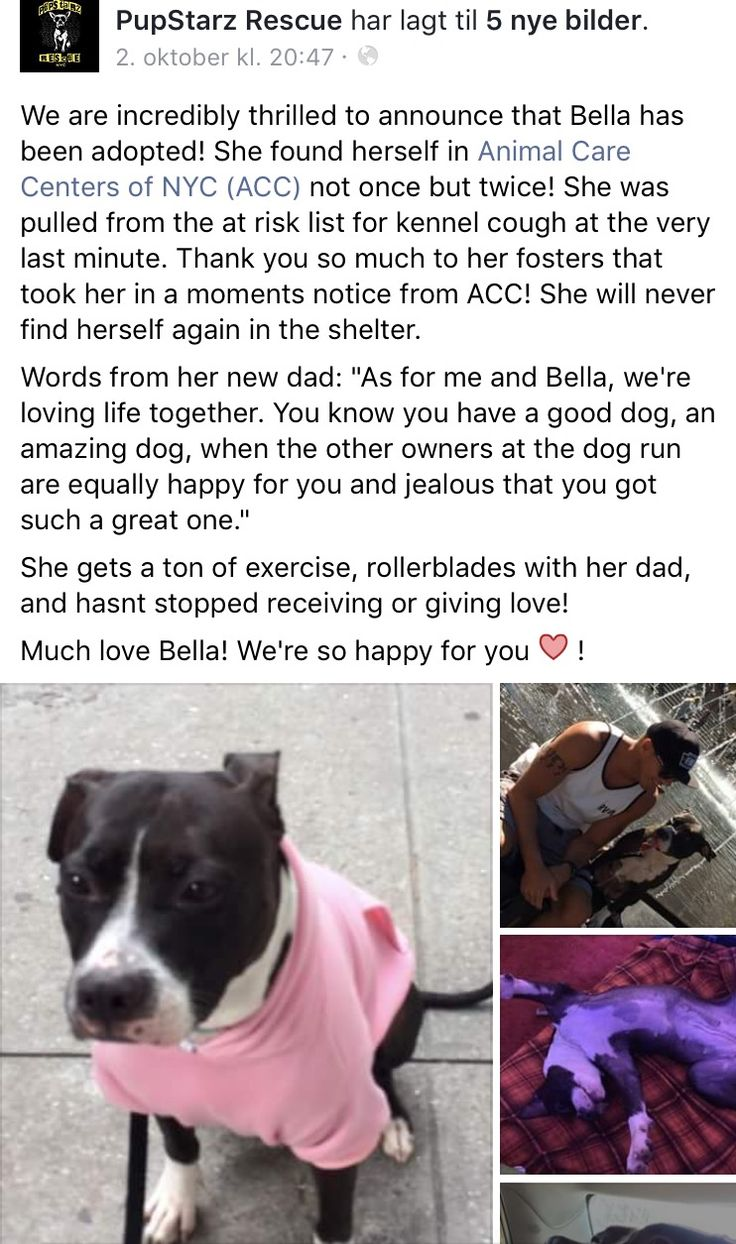 10/9/16 BELLA HAS BEEN ADOPTED❤️❤️❤️❤️❤️ /ij🐾🐾 HAPPY LIFE LOVE❤️❤️