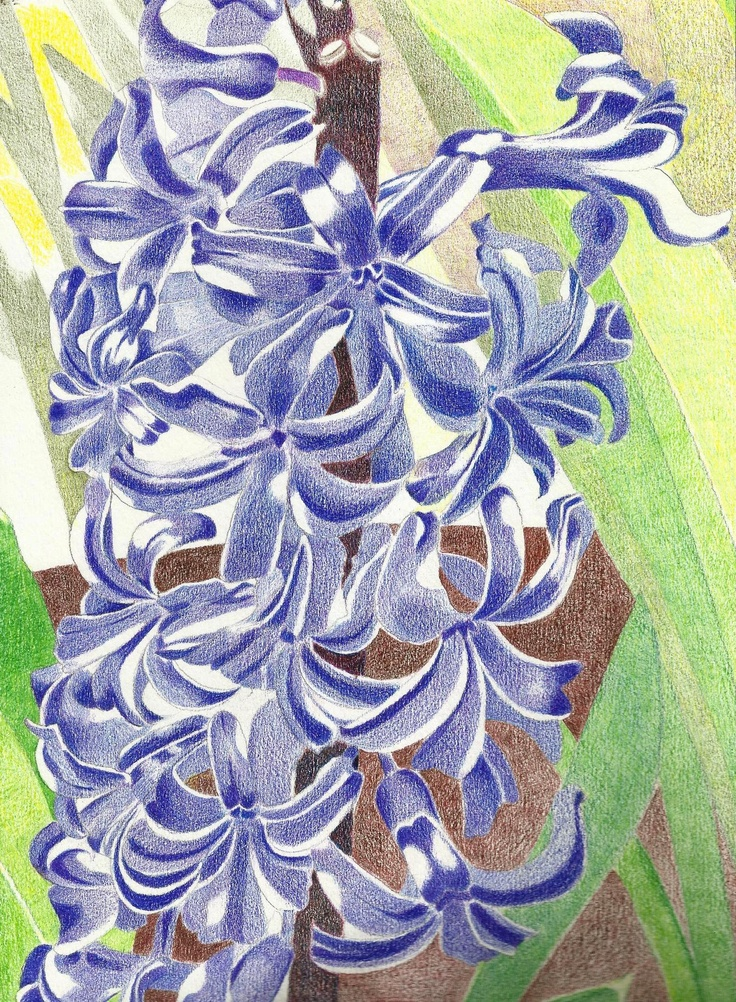 """""""Blue Hyacinth"""" by Varsha.   Faber Castell colored pencils."""