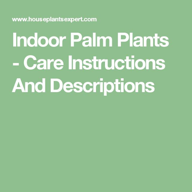 Indoor Palm Plants - Care Instructions And Descriptions