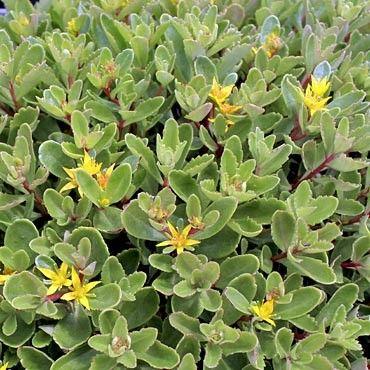 Flowers Preserving Fresh Cut FlowersNaturally