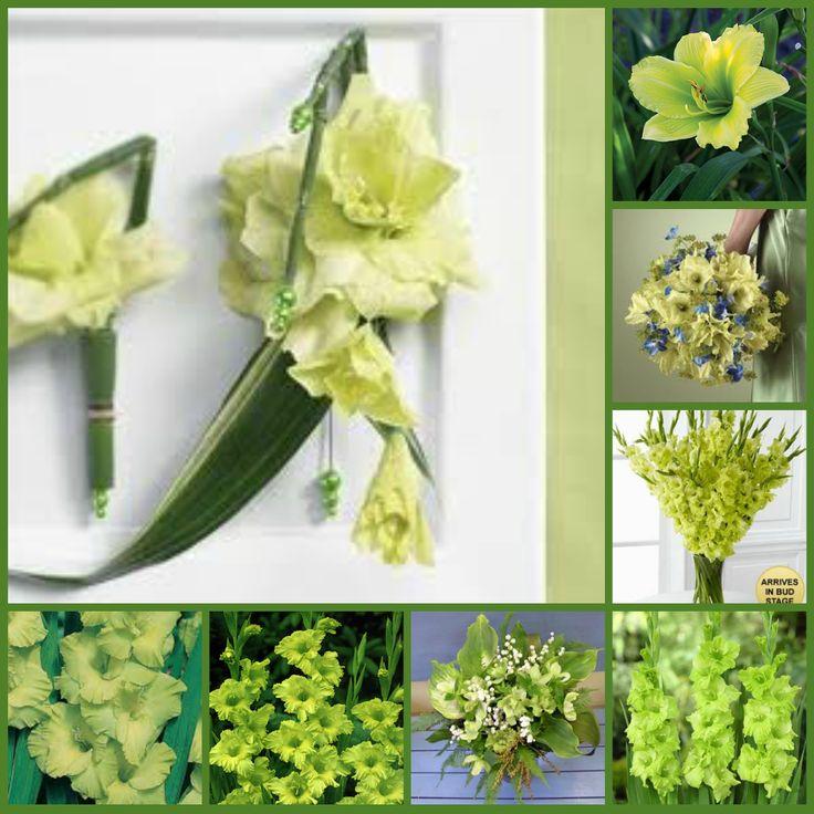 25 best ideas about Gladiolus wedding bouquet on Pinterest