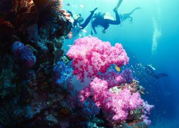 Tips for Environmentally Conscious Divers