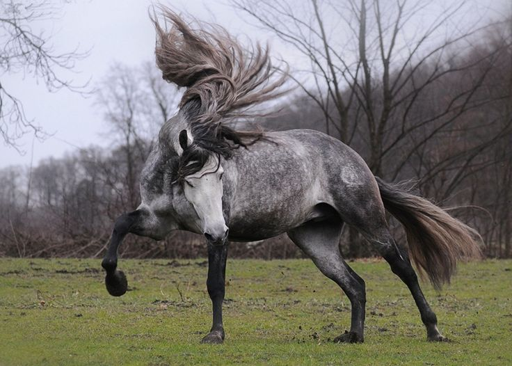 These+15+Unique+Horses+Have+The+Most+Gorgeous+Hair+You+Will+Ever+See