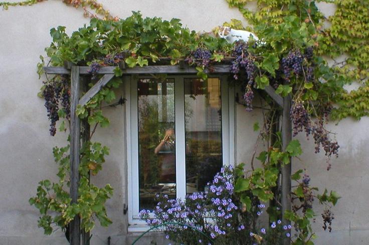 vigne grimpante autour de la fenêtre
