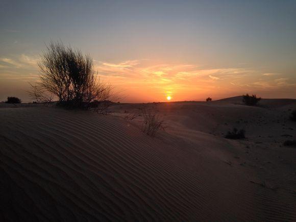 Here In The Desert
