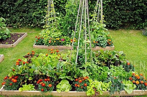 Image Result For How To Start A Vegetable Garden On Your Balcony