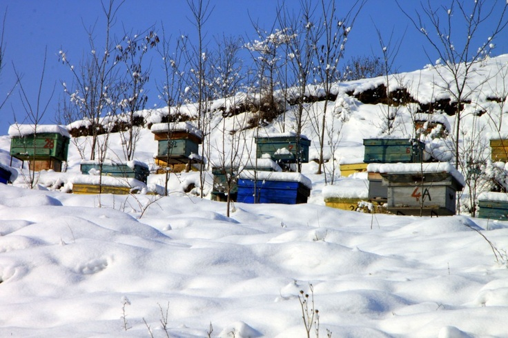 Winter Apiary – Bee Hives in Winter - Public Domain Photos, Free Images for Commercial Use
