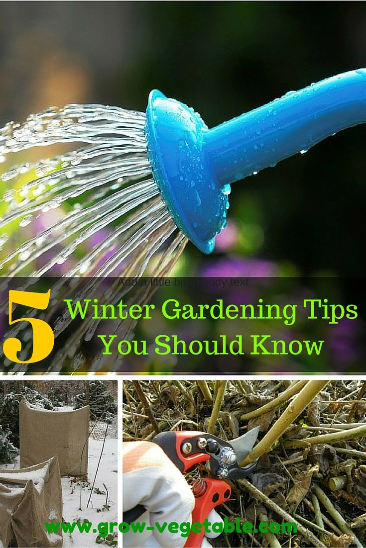 If you've really got a green thumb, then you may be looking for ways to garden even in the winter. While the cold weather can deter some people and plants,