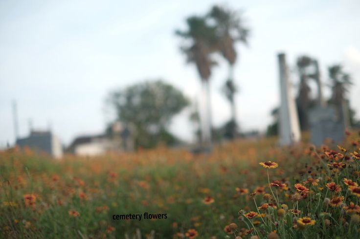 cemetery flowers, 2016