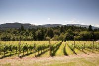 Vancouver Shore Excursion: Private Fraser Valley Wine Tour #vancouver #shoreexcursions