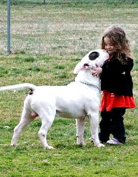 Bull Terrier with a little girl.
