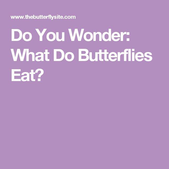 Do You Wonder: What Do Butterflies Eat?