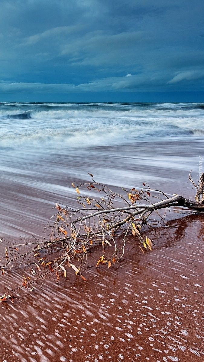 Gałąź na plaży