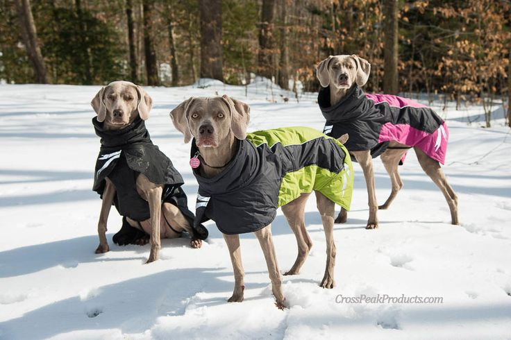 Hurtta Frost Dog Jacket & Winter Coat - Waterproof & Windproof | Cross Peak Products