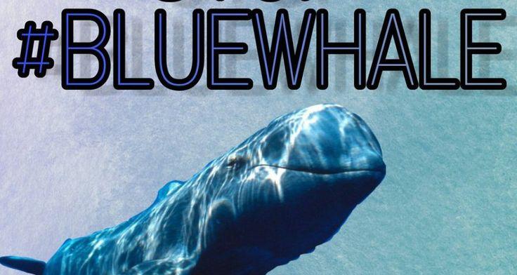 BLUE WHALE: ΝΑ ΖΕΙ ΚΑΝΕΙΣ Η ΝΑ ΜΗ ΖΕΙ;