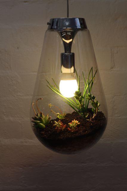 :): Pendants Lamps, Hanging Terrarium, Lighting Fit, Small Gardens, Succulent Terrarium, Hanging Planters, Cacti Gardens, Pendants Lighting, Cactus Gardens