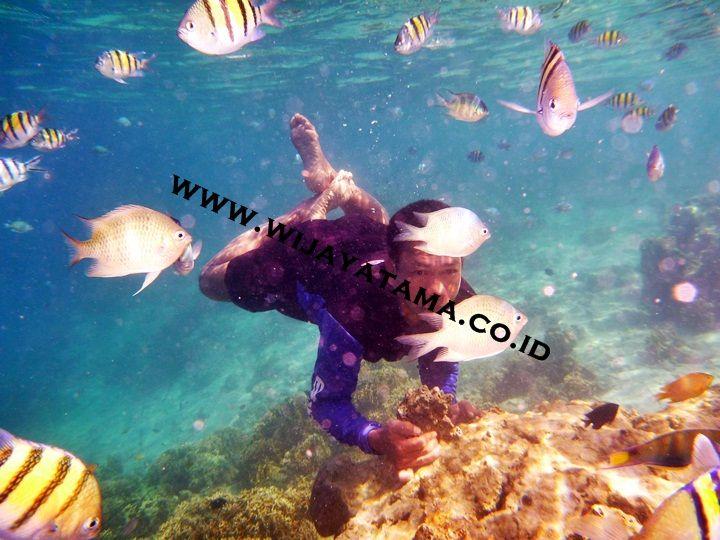 Snorkel Pulau Seribu by wijayatamatour.deviantart.com on @DeviantArt