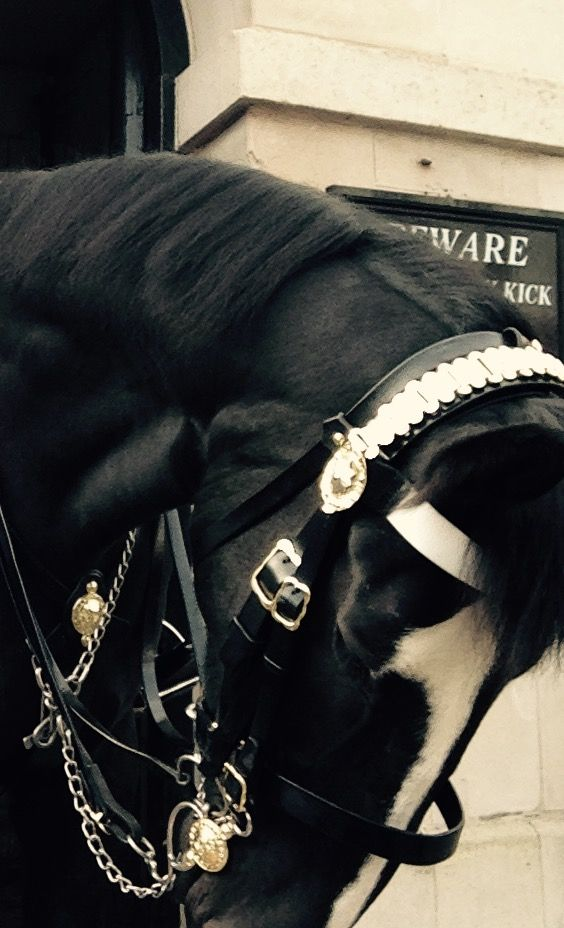 Horse Cavalry  London