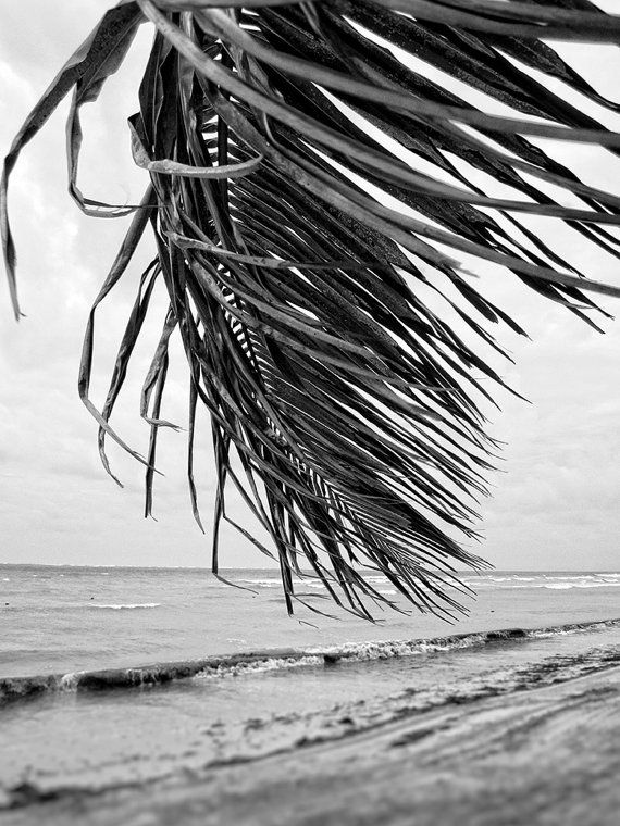 "Tropical B&W Photography ""Everyday is Like Sunday"" Black and white beach with palm tree. Wall art fo – Etsy"