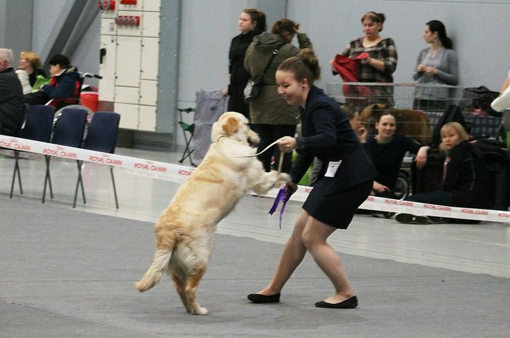 """Eetu"" Creampaws Star Trek, was in puppy show at Lahtis. Therefore first in his class and best man 2."