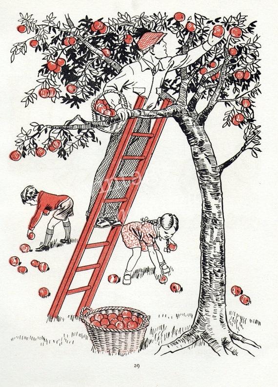 Apple picking Apple tree vintage illustration apple orchard farm life kids decor. $9.95, via Etsy.