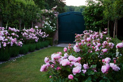 Roses In Garden: 84 Best Images About Rose Garden On Pinterest