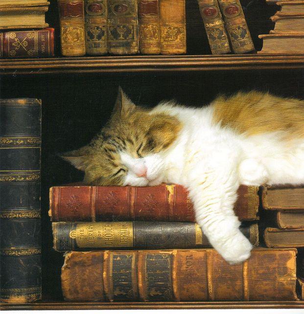 Resultado de imagem para books and cats