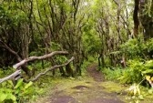 Azores : Walking path in forest of Faial island, Azores