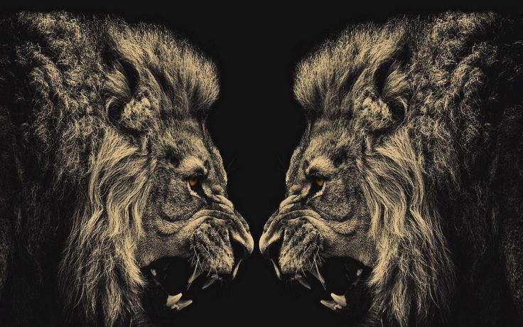 Lion Face Wallpapers Wallpaper