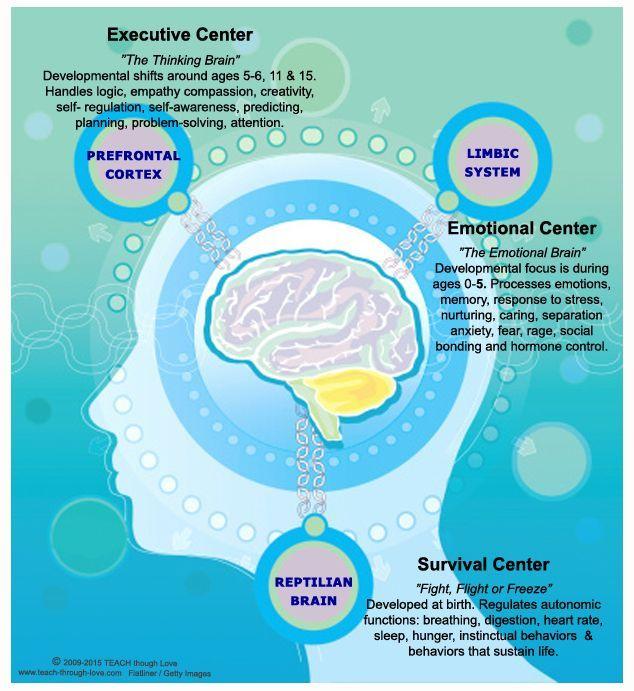 Triune Brain & Child Development.http://www.teach-through-love.com/child-brain-development.html