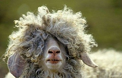 Another bad hair day!