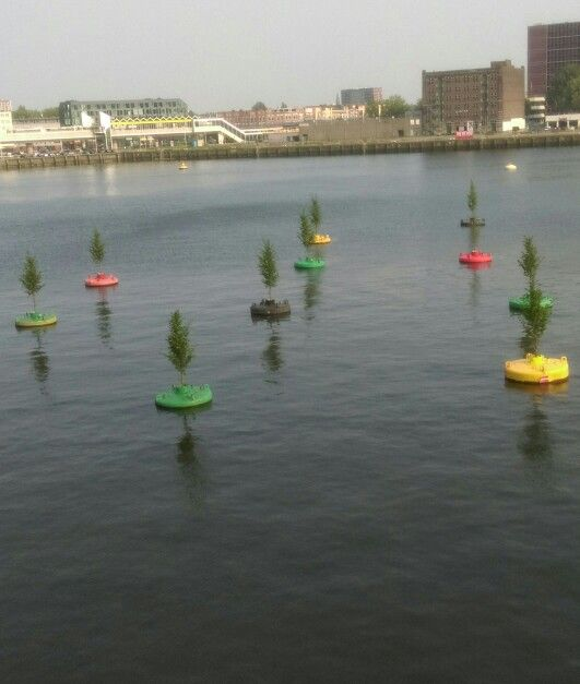 Drijvende bos #Rijnhaven #Rotterdam