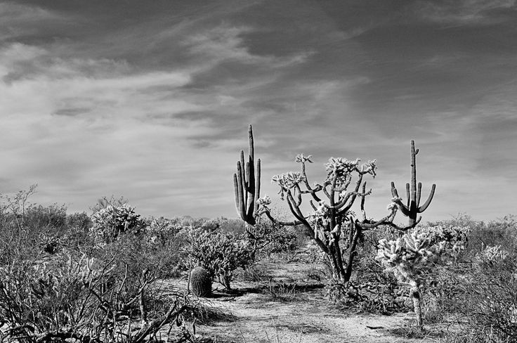 Sonoran desert by Pavel Voronenko on 500px