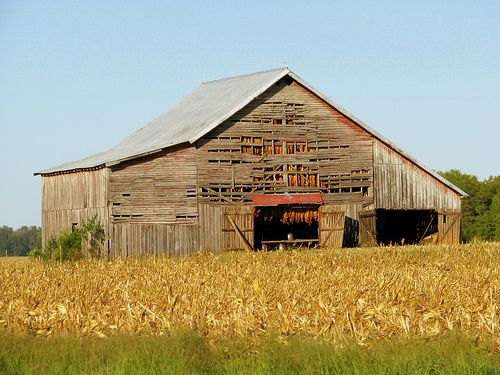 Kentucky tobacco barn