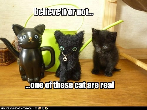 funny cat pictures - which cat is real?