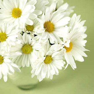 Do Embrace Blossoms