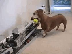 Do it yourself ball toss for your dog.