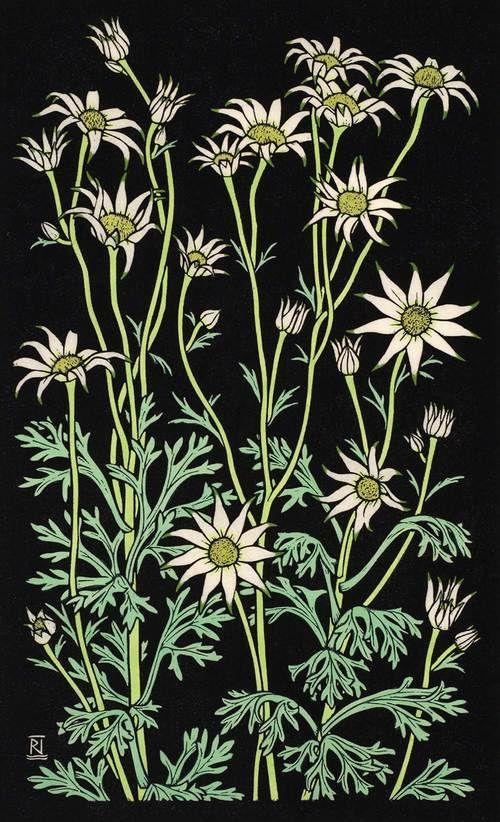 FLANNEL FLOWER III 49 X 30 CM  EDITION OF 50 Hand coloured linocut on handmade Japanese paper $850