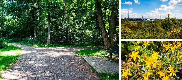 *Halde Rockelsberg - für den Sonntagsspaziergang*  #degrasi ##Halde #Halden #HaldenTour #HaldenTourRuhrgebiet #HaldeRockelsberg #onLocation #Rhein #Rheinhausen #Rockelsberg #RouteIndustrieKultur #Ruhrgebiet #Sehnswürdigkeit #Duisburg #Landmarke