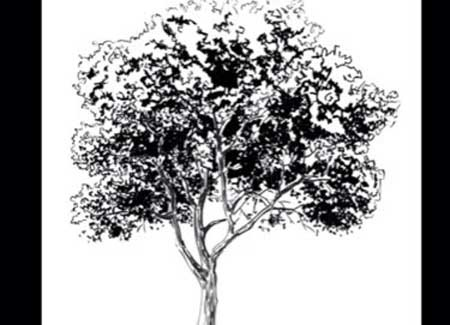 How to Draw a realistic tree with step by step instructions - Video Lessons of Drawing & Painting