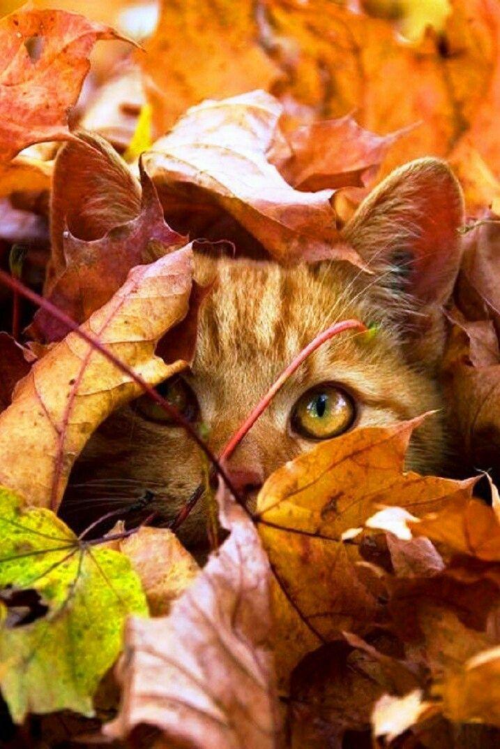 может картинки про осень и животных любимому также даёт вам