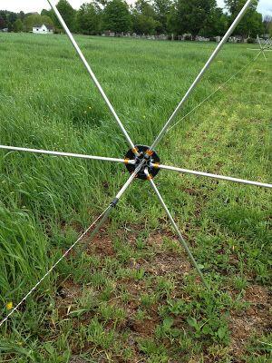 Creating Greener Pastures: Building Soil From The Bottom Up || Image Source: https://3.bp.blogspot.com/-wnWflUm0eHU/V8ex94DRefI/AAAAAAAAAvA/GQZkFdiynEMqWd6HW_rNkUt26IH7RlYeACLcB/s400/lewis-triticale.jpg