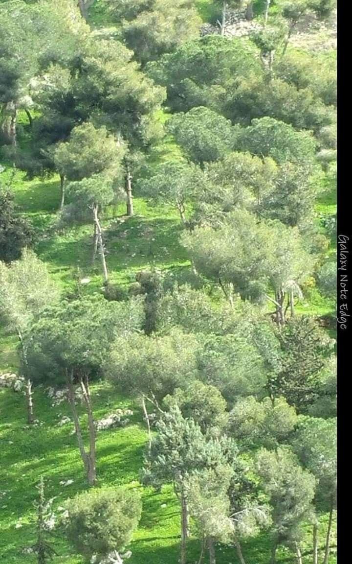 جبل الرويس النبطية جنوب لبنان Farmland Outdoor Vineyard