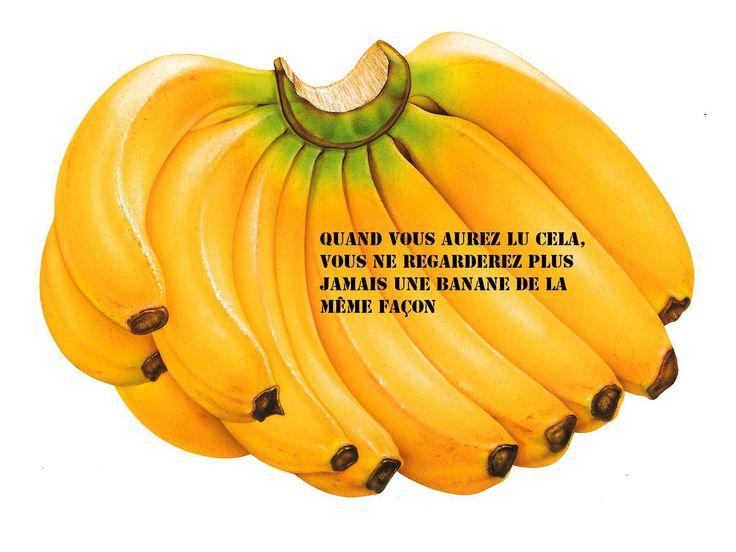 LA BANANE : La banane contient 3 sucres naturels : le saccharose, le fructose et le glucose mélangés à des fibres. La banane contient 3 sucres naturels