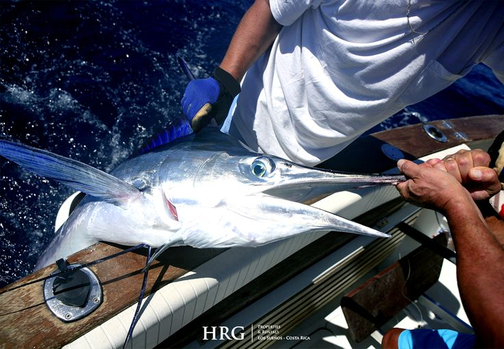 Sportfishing hrg properties and rentals prolific sport for Deep sea fishing los angeles