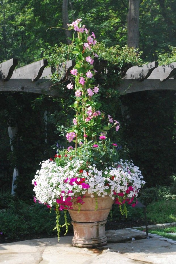 pink mandevilla, petunias, million bells, creeping jenny and it looks like veronica and dahlias