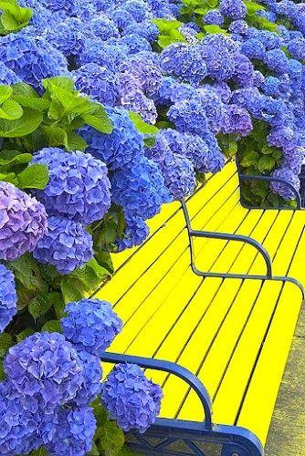 Flowers Growing Around A Park Bench. pinned by www.computerfixx.biz
